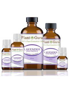 Fine French Lavender Essential Oil