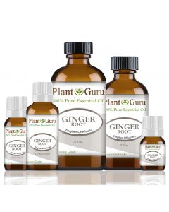 Ginger (Root) Essential Oil