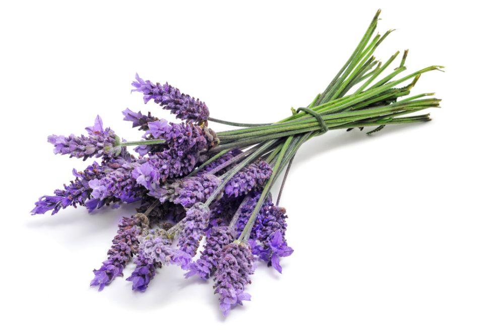 How Are Lavender Essential Oils Versatile?