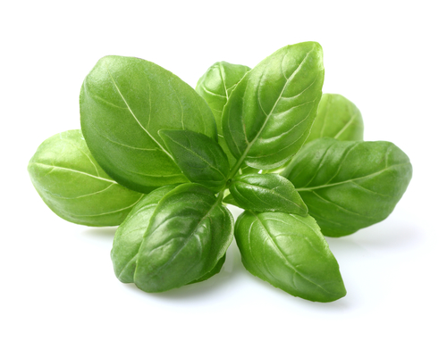 Ingredient Spotlight: Basil