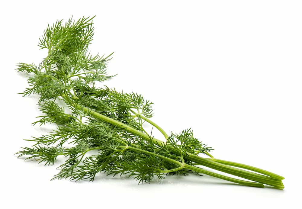 Ingredient Spotlight: Fennel Sweet