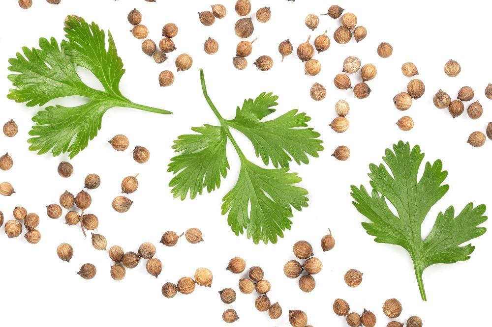 Ingredient Spotlight: Parsley Seed