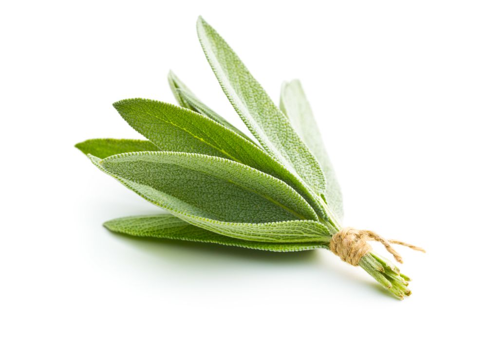 Ingredient Spotlight: Sage