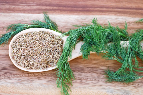 dill weed essential oil