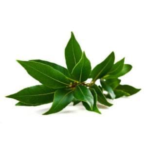Essential Oil Ingredient Camphor Leaf