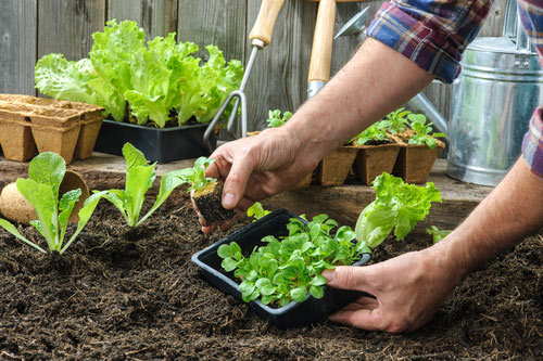 How Gardening Can Help You Live Longer