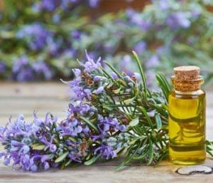 Ingredient Spotlight: Rosemary