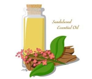 Ingredient Spotlight Sandalwood