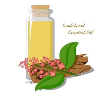 Ingredient Spotlight Sandalwood
